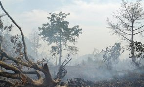 California Governor Asks Major Disaster Declaration Amid Wildfires -- Could They Be Prevented?