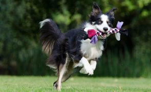 Germany to Require Dog Owners to Walk Pets Twice a Day -- Is It Too Paternalistic?